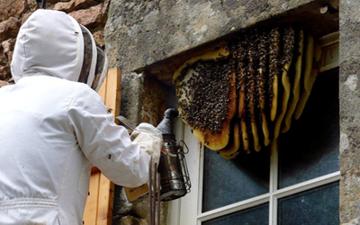 Bee Wasp Removal Services