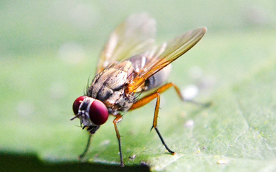 Flies Removal Services
